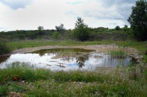 Aménagement écologique d'une carrière qui permet d'accueillir des crapauds, libellule et autres insectes qui affectionnent ces milieux humides