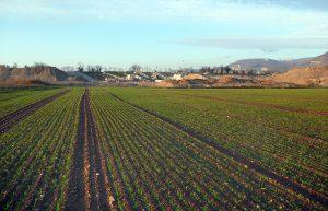 Une carrière remise en état agricole